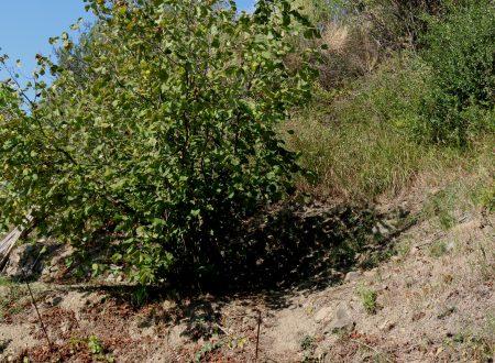 San Biagio della Cima (IM) – in collina, verso Soldano