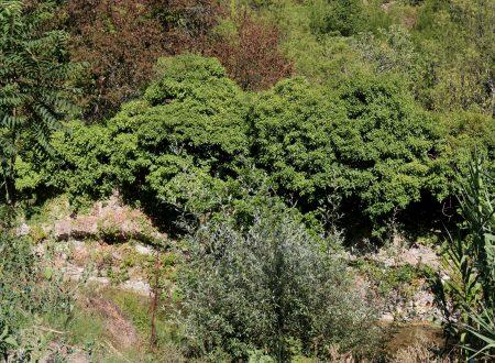Vallebona (IM) – il torrente Borghetto