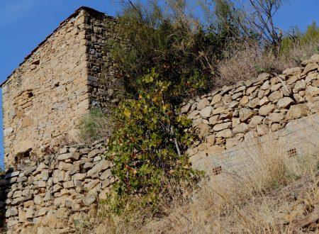 Bordighera (IM) – un rustico in Strada Bernora