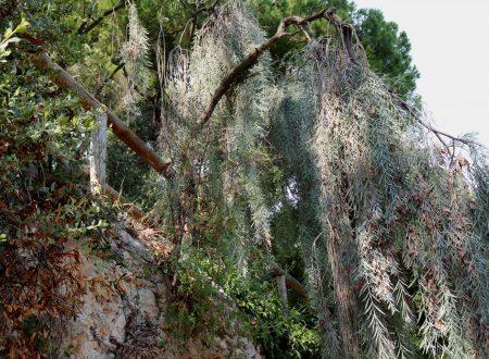 Mortola Inferiore, Frazione di Ventimiglia (IM): uno scorcio dei Giardini Hanbury