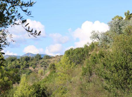 San Biagio della Cima (IM): in collina, a ponente