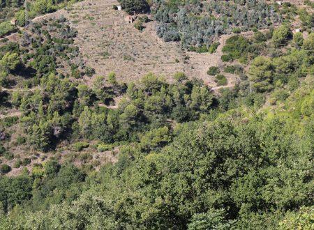San Biagio della Cima (IM): colline di ponente